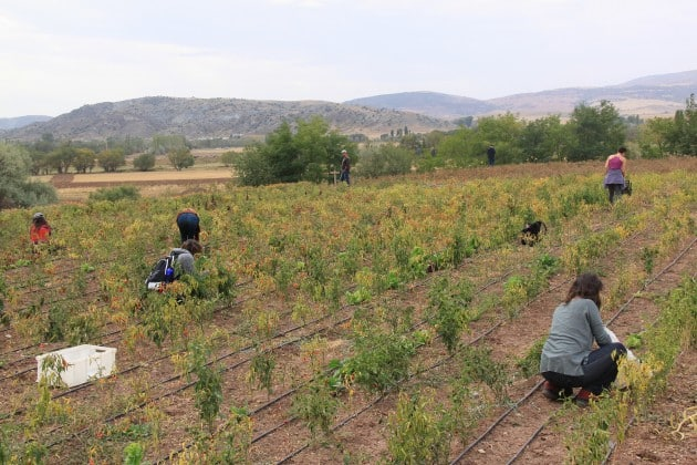 """18.06.2018 – XXI Dergisi – """"Kentsel Tarımı ve Gıda Topluluklarını Kentsel Muhalefet Çerçevesinde Düşünmek"""""""