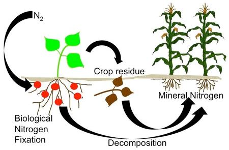 http://csanr.wsu.edu/wp-content/uploads/2014/08/4439_Legume_based_cropping_system_graphic1.jpg